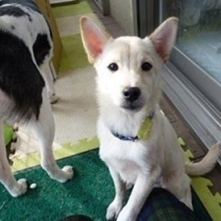 保健所から出たばかりの可愛い幼犬