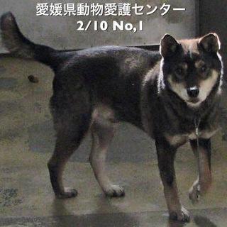 急募‼️愛媛県動物愛護センターに収容されています