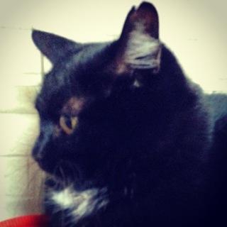 黒猫の女の子 チョコ