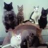 保護猫の家にゃごや(保護活動者)