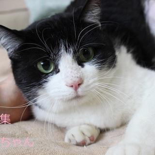 「白黒猫」を含む猫の里親募集情報 :: ペットのおうち【月間 ...