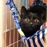 弱虫な黒猫ちゃん(♀生後5ヶ月)