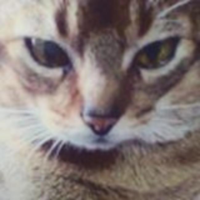キムラヒロのカバー写真