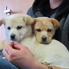 子犬二匹  雑種  3ヶ月