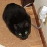 黒子猫 小次郎君のお母さんになってあげてください。