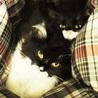 ふわふわ長毛かわいい白黒 姉妹猫(トライアル開始)