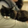 ふわふわ長毛かわいい白黒 姉妹猫(トライアル開始) サムネイル3
