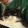 ふわふわ長毛かわいい白黒 姉妹猫(トライアル開始) サムネイル2