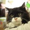 ふわふわ長毛かわいい白黒 姉妹猫(トライアル開始) サムネイル4