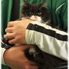 ふわふわ長毛かわいい白黒 姉妹猫(トライアル開始) サムネイル5