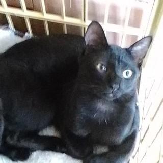 ハンサムな黒猫ニコラスくん