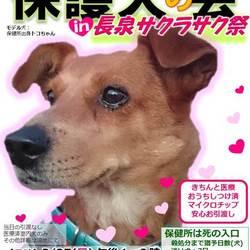 保護犬の会in長泉町 サクラサク祭り