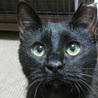 甘いぞおー可愛いぞおー♪ザ・黒猫の「あんこ」です!