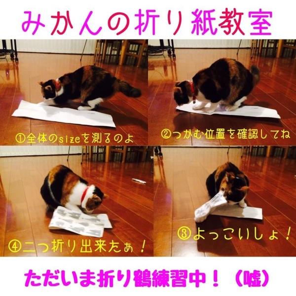 pet-home.jp
