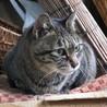 飼主が急死してしまい猫達が困っています。
