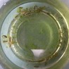 オキナワシリケンイモリの卵 約25個