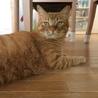 去勢済みの猫ちゃん。ご応募ありがとうございました。