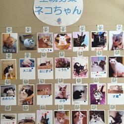 わんにゃん小梅保育園☆川越で保健所レスキュー犬猫の里親会☆子猫多数 サムネイル1