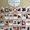 わんにゃん小梅保育園☆川越で保健所レスキュー犬猫の里親会☆子猫多数