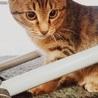 遊びたい盛り可愛い子猫兄弟‼︎