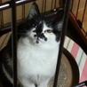 五郎丸似のファニーフェイス少女/キントン5ヵ月 サムネイル4