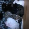 【新規応募停止中】子猫の里親募集