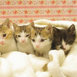生後約1カ月の4兄妹です