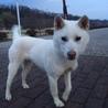 生後10ヶ月、元気いっぱい紀州犬のムツくん。 サムネイル3