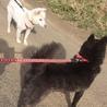 生後10ヶ月、元気いっぱい紀州犬のムツくん。 サムネイル4