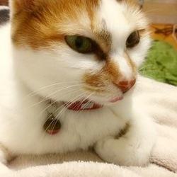 アニマルトレーナーもアドバイス猫の無料相談会