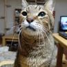 若々しい20歳のオレ様な猫 サムネイル6