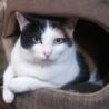 甘えたいけど遊んでもほしい三毛猫 キティです。