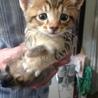 子猫が5匹産まれました。