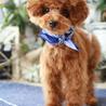 保護犬 ココア 5ヶ月♡