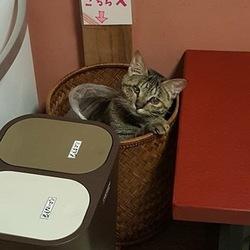 猫の無料相談会 アニマルトレーナーもお答えします!