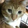 デカ猫ポーちん/3歳オス
