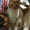 デカ猫ポーちん/3歳オス サムネイル2