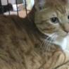 デカ猫ポーちん/3歳オス サムネイル3