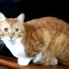 デカ猫ポーちん/3歳オス サムネイル5