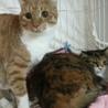 デカ猫ポーちん/3歳オス サムネイル6