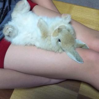 ミニウサギ 2ヵ月