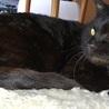 温厚で聡明な黒猫と暮らしたい里親さん募集