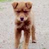 空き地の野良子犬【里親さんが見つかりました】