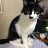 白黒のネコです