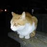 茶白の猫ちゃん里親決定!