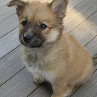 生後2ヶ月の雑種の子犬5頭