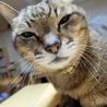 若々しい19歳のオレ様な猫 サムネイル4