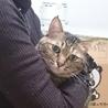 可愛いさ満点。癒し系猫かえでちゃん。 サムネイル5