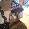 可愛いさ満点。癒し系猫かえでちゃん。 サムネイル6