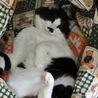 癒し系の、本当に飼いやすい猫ちゃんです。